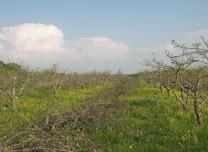 Kevad 2010